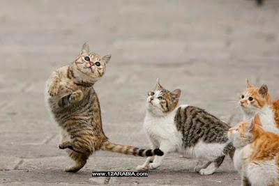 cat+dance