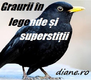 Graurii: legende și superstiții