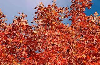 http://bastelschoeppchens-blog.blogspot.de/2015/10/indian-summer-unsere-oktoberchallenge.html