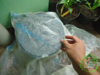 Penutupan semaian dengan plastik transparan