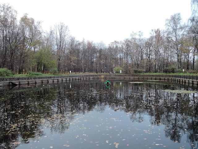 парк сокольники собачий пруд