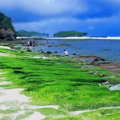 Foto Rumput Laut di Pantai Slili