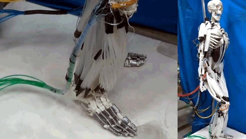 artificial muscle skeleton robot