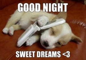 Good Night Sweet dreams, Cute and Funny Dog Image, Meme
