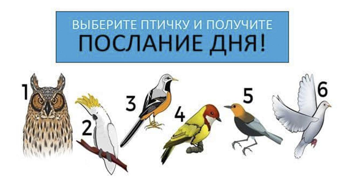 Тест-предсказание Летняя птица изоражения