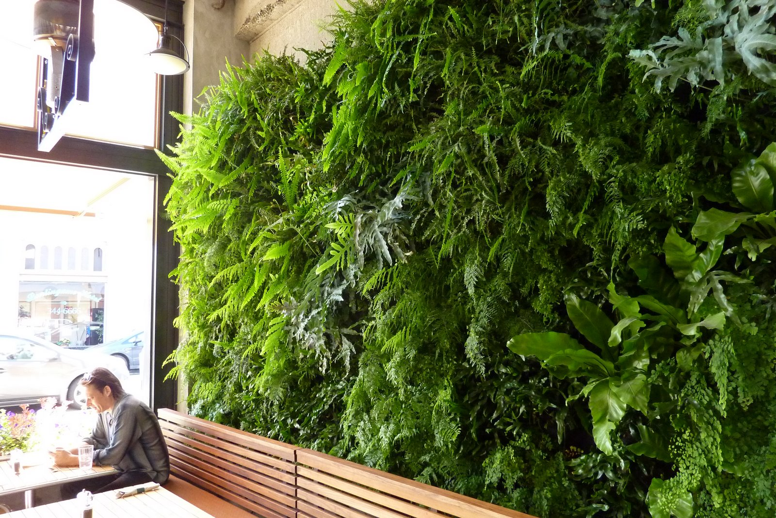 Plants On Walls Vertical Garden Systems Fern Wall For
