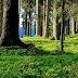 Missä ovat Euroopan viimeiset luonnonmetsät?