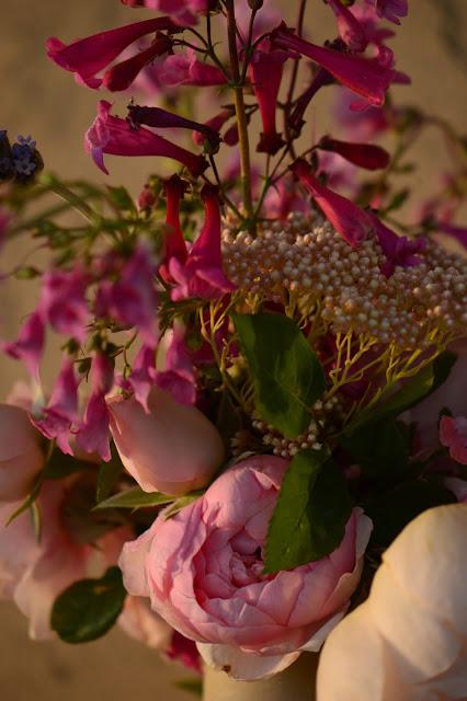 monday vase meme, small sunny garden, amy myers, desert garden, penstemon, rose, david austin, alnwick rose