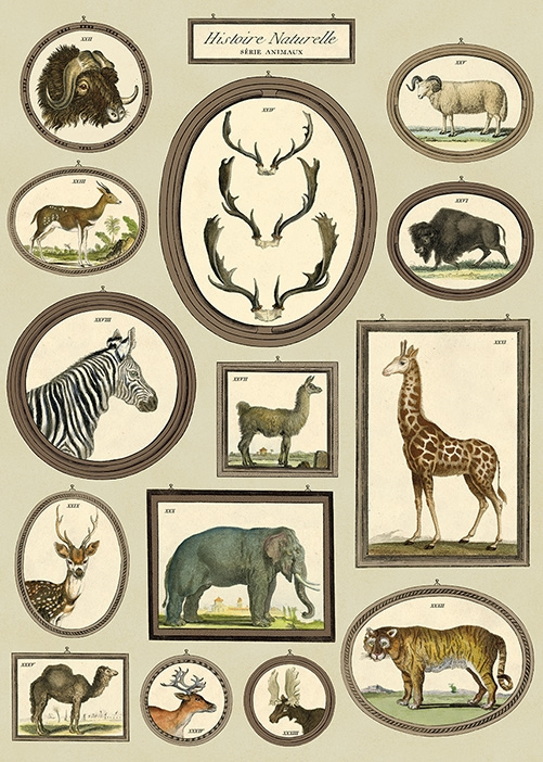 http://www.shabby-style.de/poster-nostalgische-safari