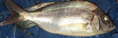 IMG 3354 b - SurfCasting: Selección gallega de pesca