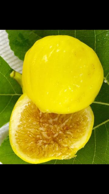 XIN JIANG Figs
