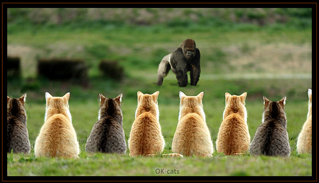 Photoshopped Cat picture • NOPE, you shall NOT pass Mister King Kong!