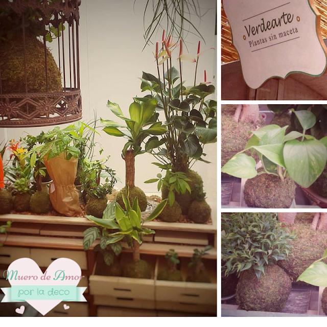 Plantas naturales sin maceta de VERDEARTE-By Ana Oval-4