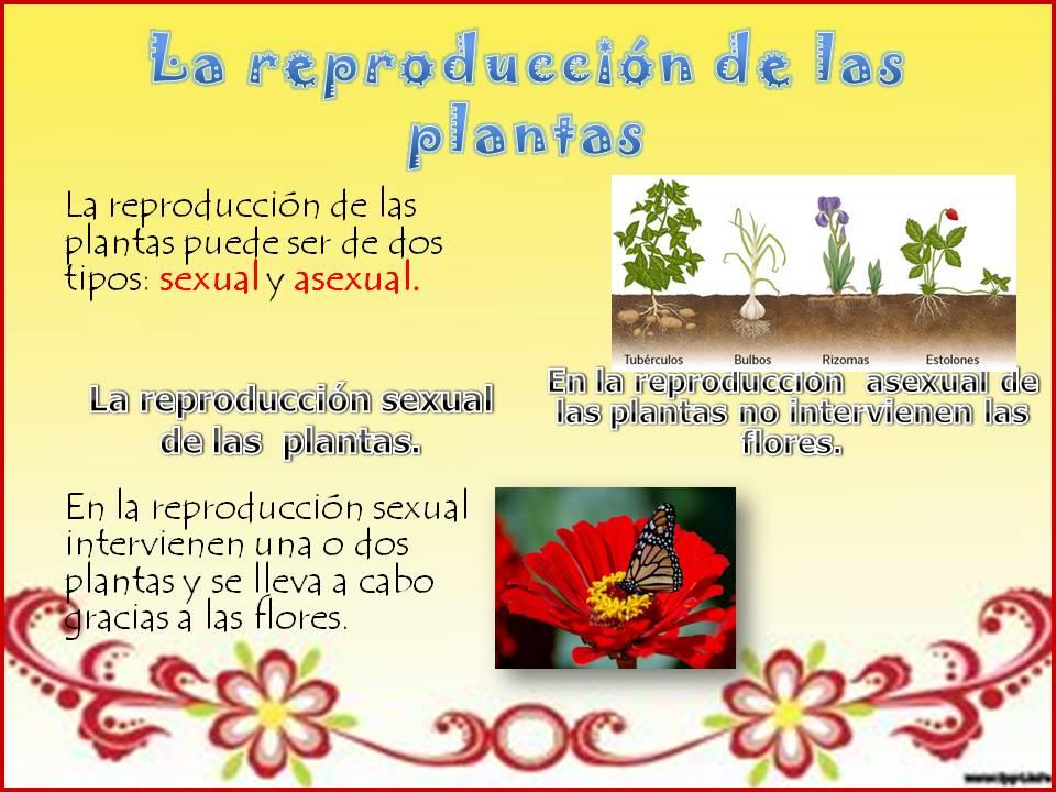 Reproduccion de las plantas sexualmente y asexualmente