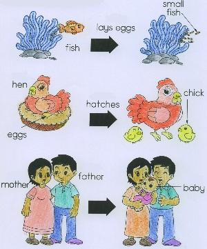 biology!!