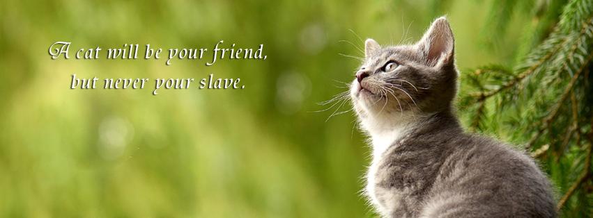 Cat Facebook banner