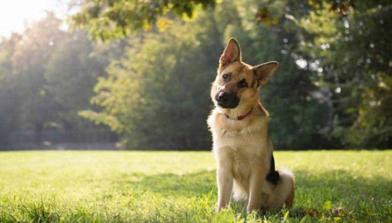 Τα σκυλιά καταλαβαίνουν αν κάποιος είναι κακός άνθρωπος