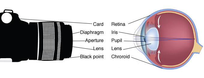 How does the human eye work all about the eyes medical school human brain works out that what you are seeing around you and it act like a memory it happen just like that you open your eye in the morning and close your ccuart Choice Image