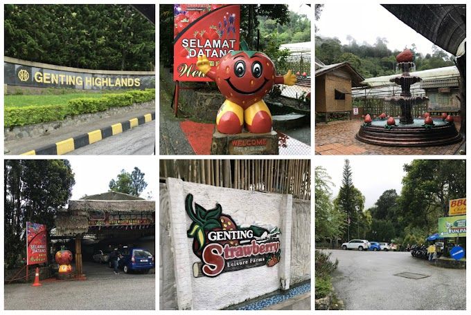 Petik Strawberry | Genting Strawberry Leisure Farms Genting Highland
