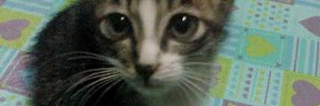 Para Kucing  Ibu yang (Mungkin) Sudah di Surga
