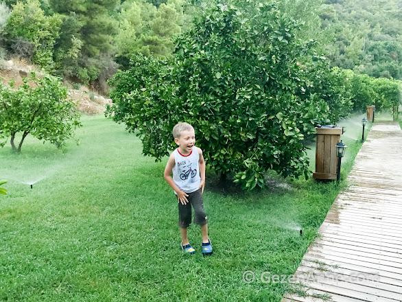 portakal ağaçları arasında suda eğlenen oğlum, Azra Villas Çıralı
