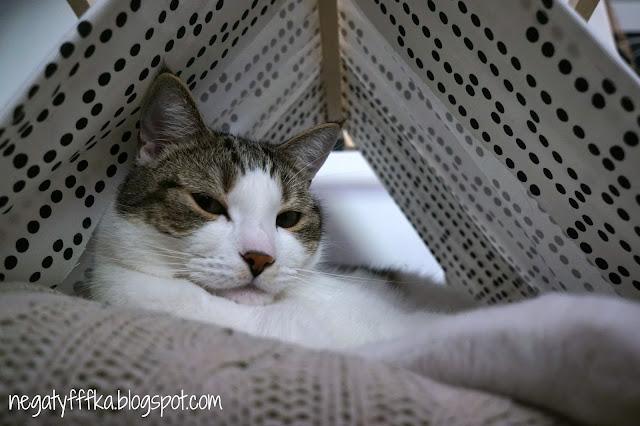 Dom bez kota to głupota czyli o designerskim legowisku