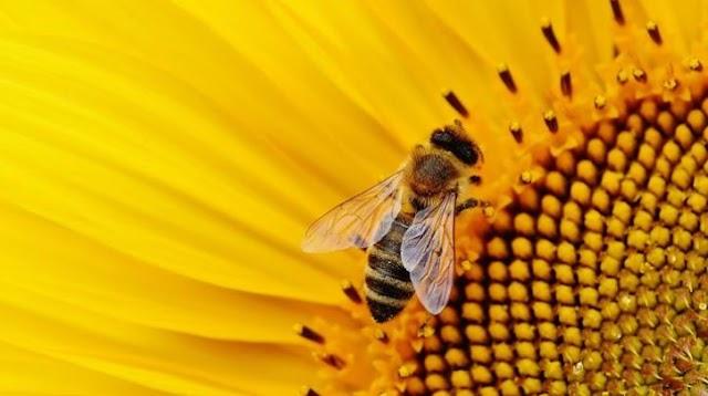 Μια μέλισσα μπορεί σταματήσει την παγκόσμια εξάρτηση από τα πλαστικά;
