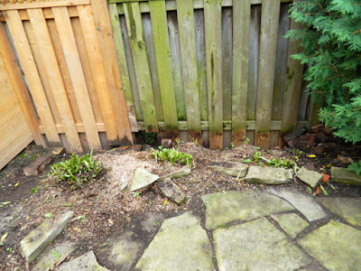 Riverdale Toronto Backyard Fall Cleanup After by Paul Jung Gardening Services--a Toronto Organic Gardener