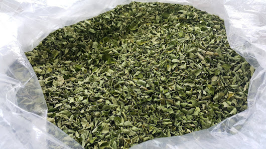 malunggay leaves investigatory project Malunggay has leaves and seeds (small) and both of them can produce extracts malunggay leaves extract can be use in many ways, it can be use in curing illnesses and investigatory project title:sea shelled bricks submitted to: sir marvin manangan submitted by: euhnice surdivillar.