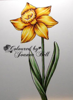 daffodil colouring by Joanne B - colours and cards
