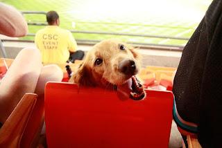 Foto divertida con el perro