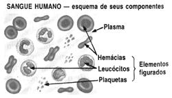 MUNDO DA HISTOLOGIA: Tecido Sanguíneo