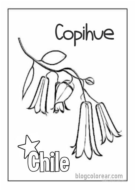 dibujo Copihue para colorear