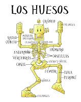 Resultado de imagen de el esqueleto humano