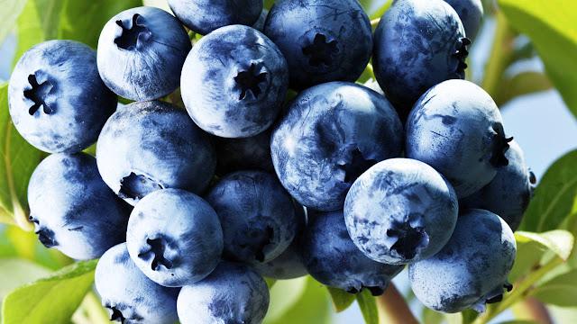 minum jus blueberry