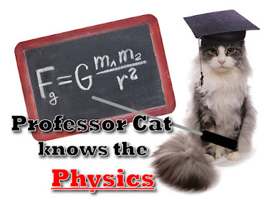 Professor Cat with blackboard and gravity equation