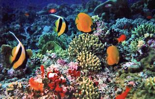 Pengertian Ekosistem Laut, Macam, dan Jenisnya TERLENGKAP