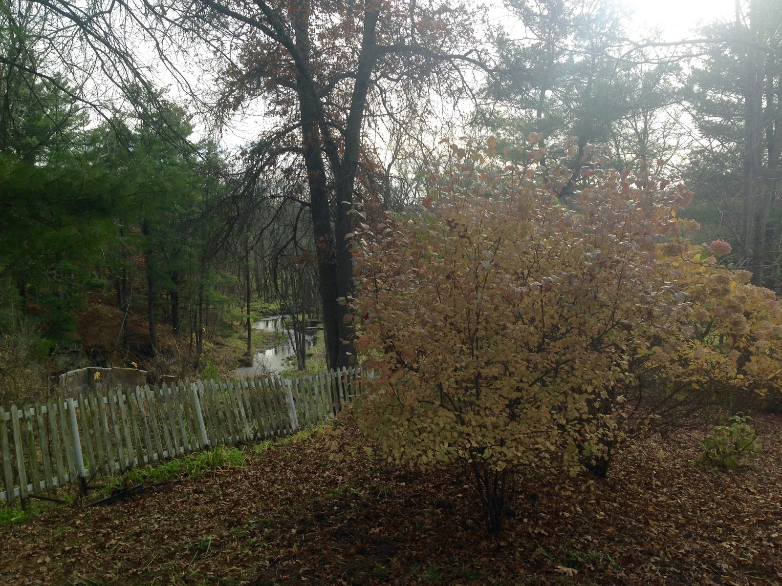 my fall garden 2016 amy u0027s creative pursuits