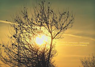 Ο ήλιος στη δύση του πίσω από κλαδιά δέντρων