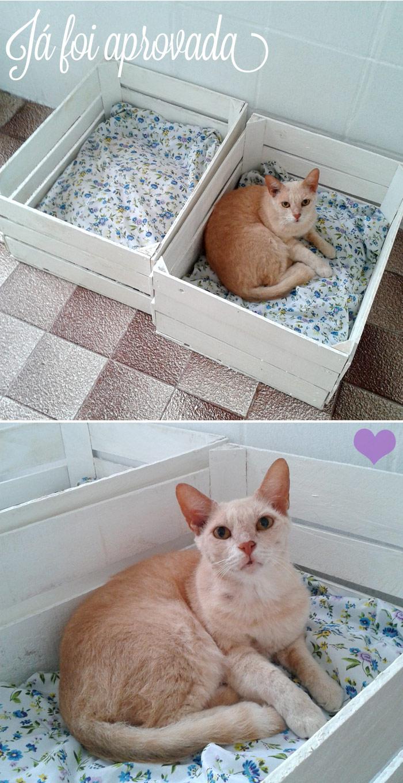Fiz camas de caixotes pros gatos   Ricota No Derrete