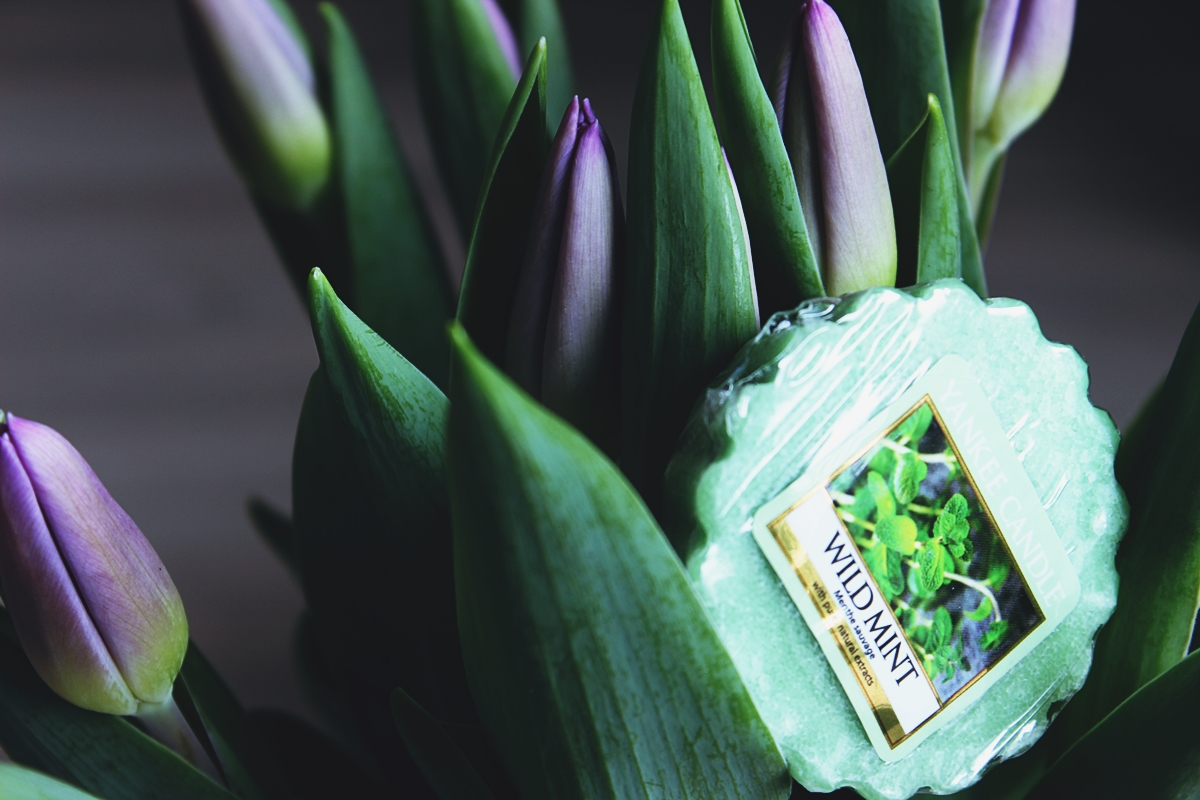 wild mint yankee candle wosk