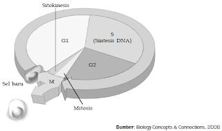 Pengertian Tahapan Profase, Metafase, Anafase dan Telofase Dalam Proses Reproduksi Serta Pembelahan Sel Secara Mitosis