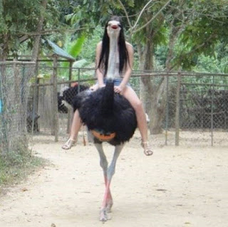 holiday ostrich rides