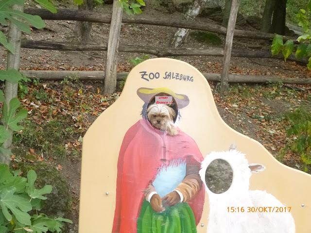 auch Bronco gefiel es im Salzburger Zoo