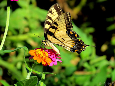 butterfly, becky stiller photography, spiritual life, new life