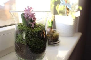 hiacynty, kwiaty zimą, poczuć wiosnę