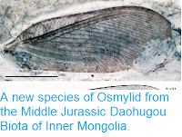 http://sciencythoughts.blogspot.co.uk/2014/05/a-new-species-of-osmylid-from-middle.html