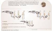 http://biologia.uab.es/genomica/swf/genotipo.htm