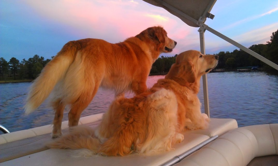 Golden brothers on the lake