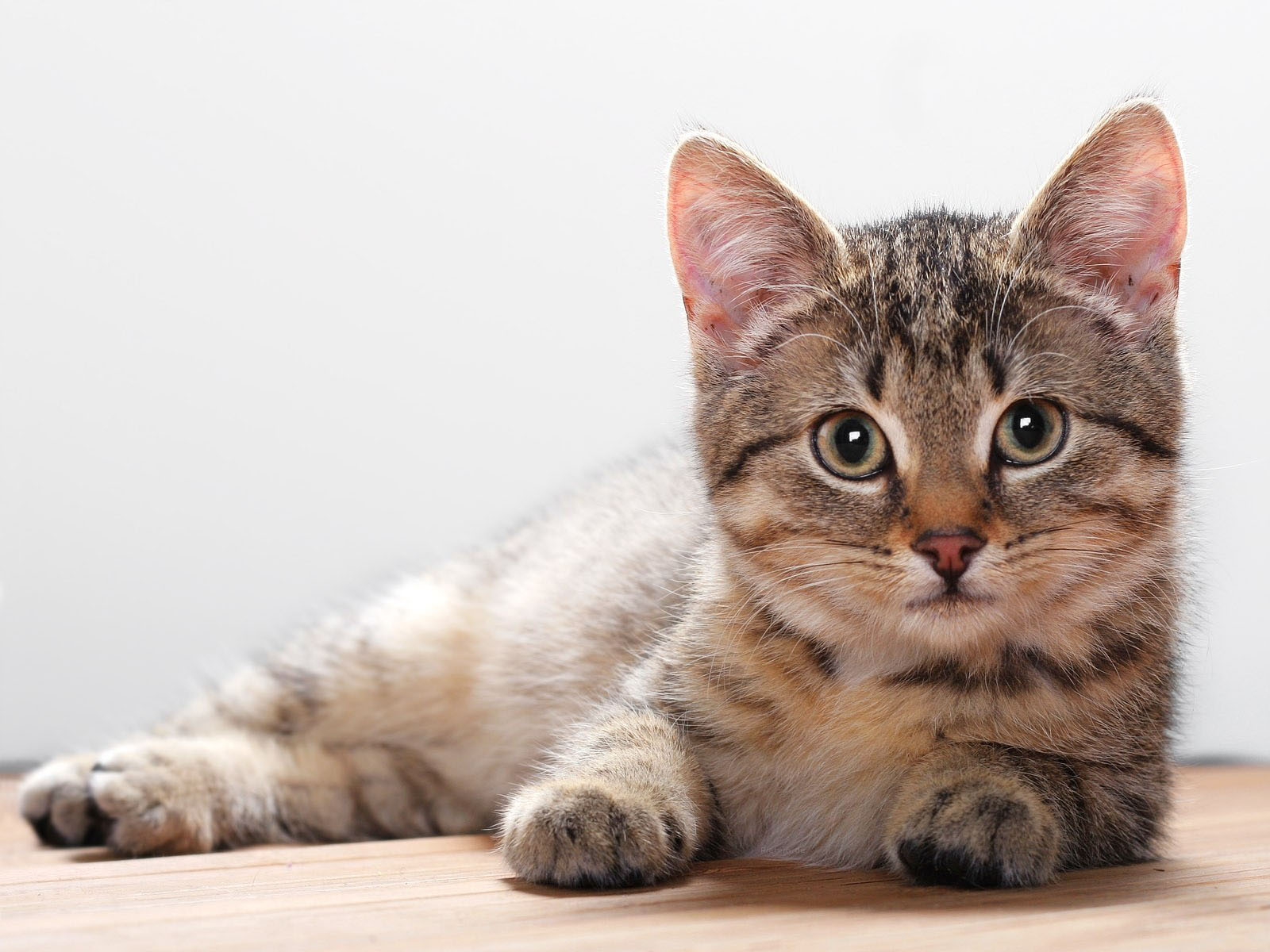 Wallpapers meow meow cat wallpapers - Free wallpaper of kittens ...